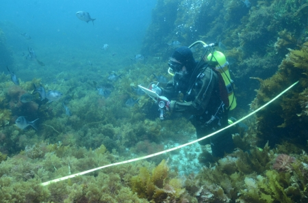 Scuba diver on floor of reef recording measurements that he is taking.